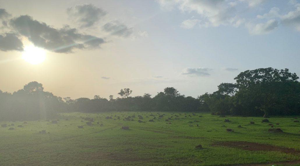 Het Haut Niger National Park bij ondergaande zon in de zomer; als er al meerdere regens zijn gevallen is alles opeens groen.